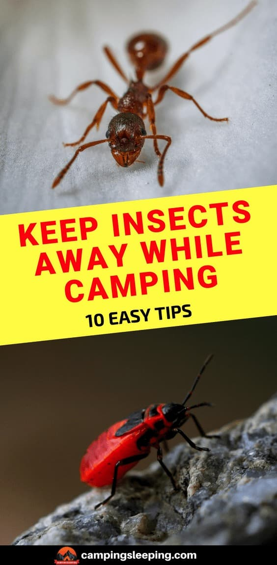 10 Easy Tips To Keep Bugs And Insects Away While Camping